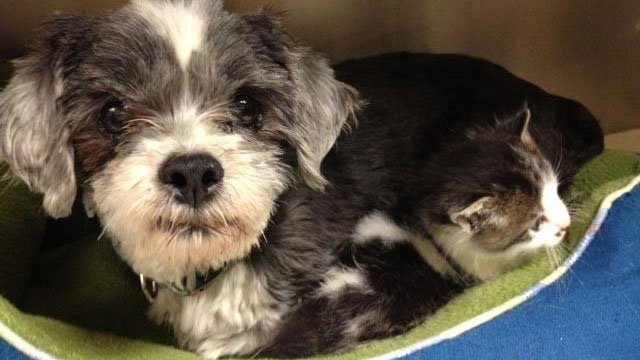 The dog and her adopted kitten at PAWS. (May 14, 2013/FOX Carolina)