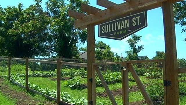 Mill Village Farms' Sullivan Street farm is one of three urban farms. (June 11, 2013/FOX Carolina)