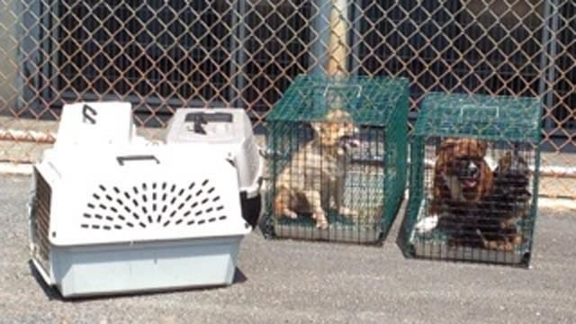 Some of the dogs brought in to Greenville Co. Animal Care on Thursday. (June 20, 2013/FOX Carolina)