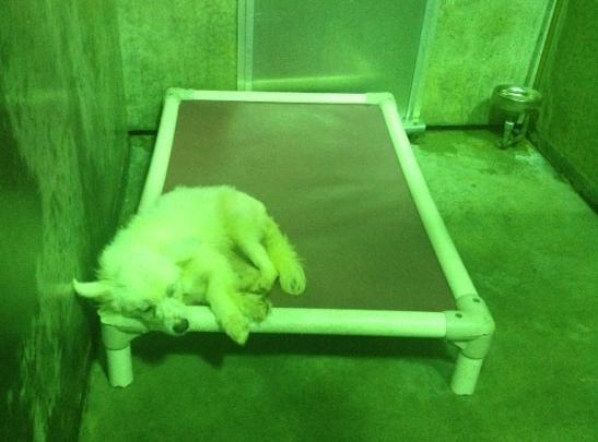 A dog waiting to be adopted.(July 6, 2013/FOX Carolina)