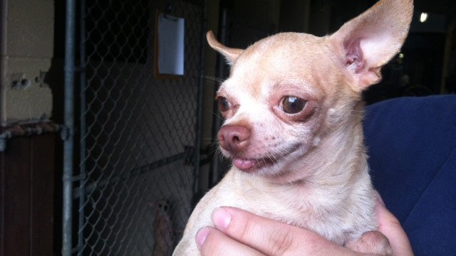 A dog recovered from the house of the victims (Source: FOX Carolina)