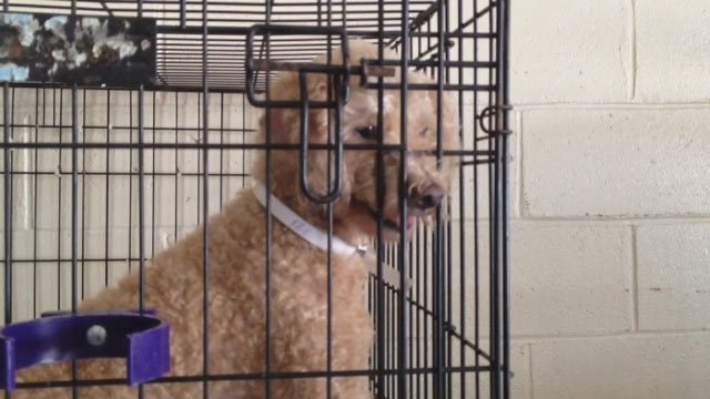 One of the rescued dogs at a shelter in Anderson County. (Aug. 13, 2013/FOX Carolina)