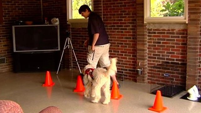 Zakk Wrabiutza works with his service dog at home in Anderson. (Sept. 18, 2013/FOX Carolina)