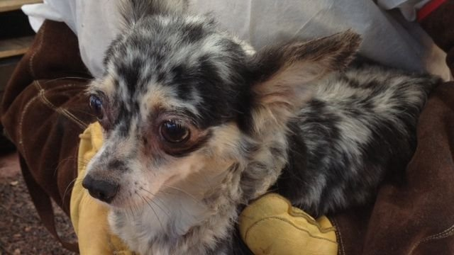 One of the rescued dogs. (Aug. 10, 2013/FOX Carolina)