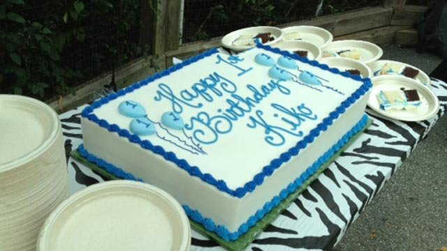 One of the cakes celebrating Kiko's birthday, for guests to eat. (Oct. 22, 2013/FOX Carolina)