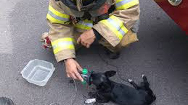 Pet oxygen masks to be donated to Oconee Co. (Source: Oconee Co. Fire Dept.)