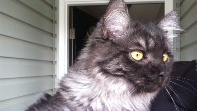 Toby the cat is back home and happy. (Nov. 7, 2013/FOX Carolina)