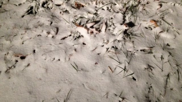 Snow near the NC-TN border. (Nov. 12, 2013/FOX Carolina)