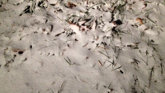 Snow near the NC-TN border. (Nov. 12, 2013/FOX Carolina)