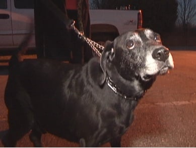 A Greenville dog owner hopes her pup Justin stays healthy as he generally is kept away from other dogs. (Nov. 13, 2013/FOX Carolina)