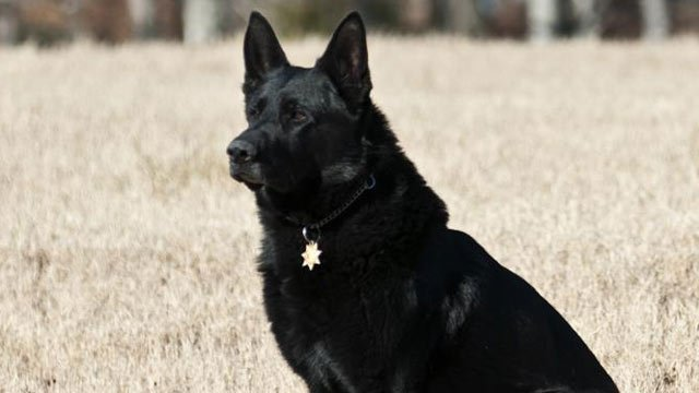 Canine Roscoe (Source: Greenville Co. Sheriff's Office)