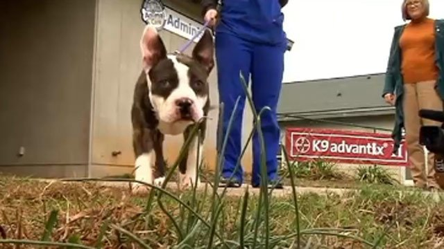 Gucci is healing and ready for his new home. (Nov. 25, 2013/FOX Carolina)
