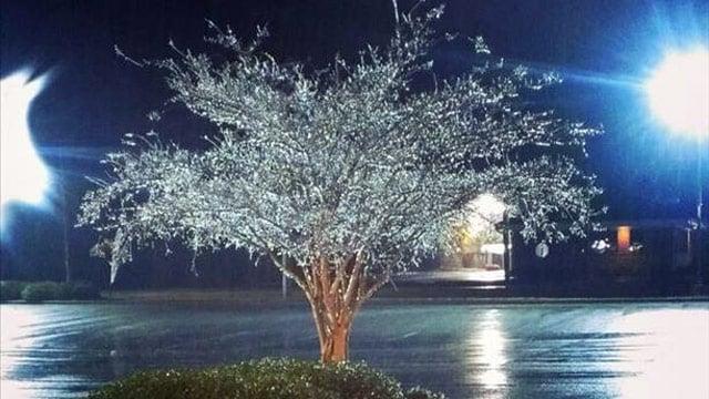 An ice-covered tree in Taylors. (Nov. 26, 2013/FOX Carolina iWitness)