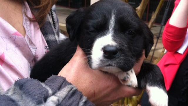One of Andra Grace's puppies, Suzanne. (Dec. 5, 2013/FOX Carolina)
