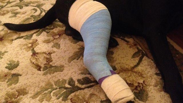 Remi's bandaged leg. (Dec. 17, 2013/FOX Carolina)