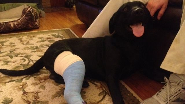 Remi recovering at home. (Dec. 17, 2013/FOX Carolina)