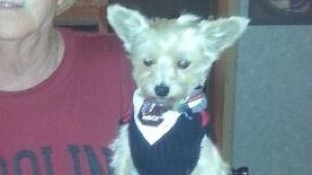 A photo of Toby. (Courtesy: Paula Culbertson)