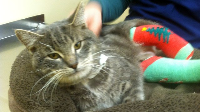 Jiggles the cat at the doctor's office. (Dec. 19, 2013/FOX Carolina)