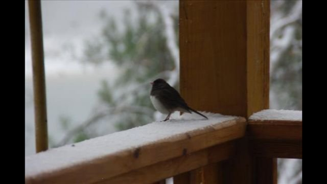 A bird on a snowy perch (Source: FOX Carolina iWitness Pastor Pete)