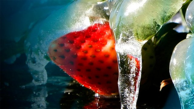A frozen strawberry crop. (File/FOX Carolina)