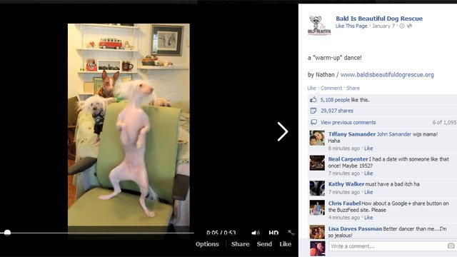 A screen grab of the viral video on the rescue's Facebook page. (Source: Bald Is Beautiful on Facebook)