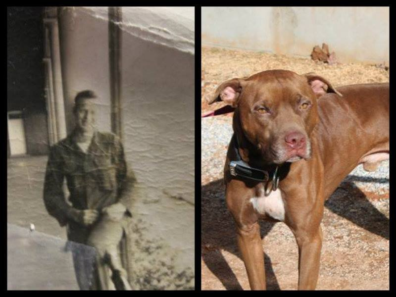 Photo of Soldier (right) and the picture found in his collar (Courtesy: Greenville County Animal Care)
