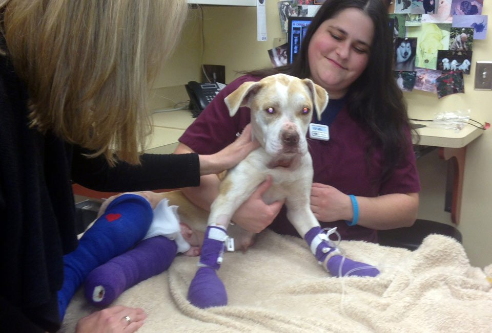 Andra Grace recovering from her wounds. (Dec. 2, 2013/FOX Carolina)