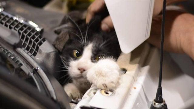 """The frightened feline inside the truck nicknamed """"Little Houdini"""". (Jan. 30, 2014/Spartanburg Animal Services Facebook)"""