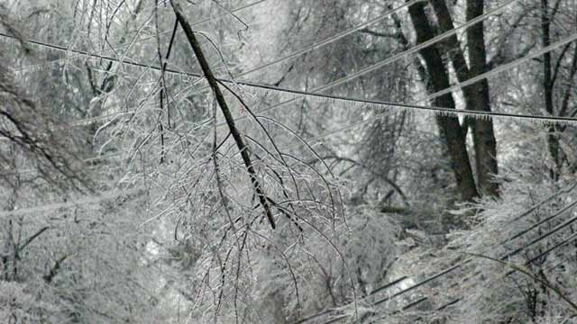 Ice and snow on tree branches and wires. (AP)