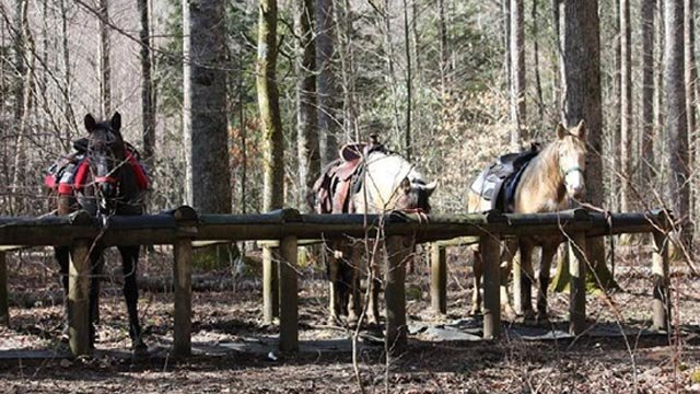Horses at the stables. (Source: Smokemontridingstable.com)
