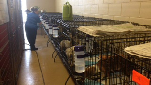 PAWS Animal Shelter takes care of the rescued animals. (Feb. 22, 2014/FOX Carolina)
