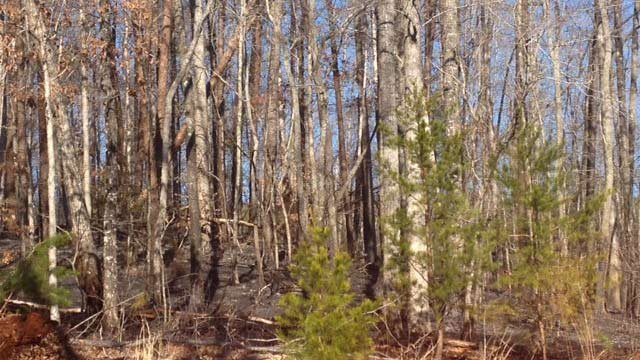A brush fire burned in Pickens County on Wednesday before the NWS made the announcement. (Feb. 26, 2014/FOX Carolina)