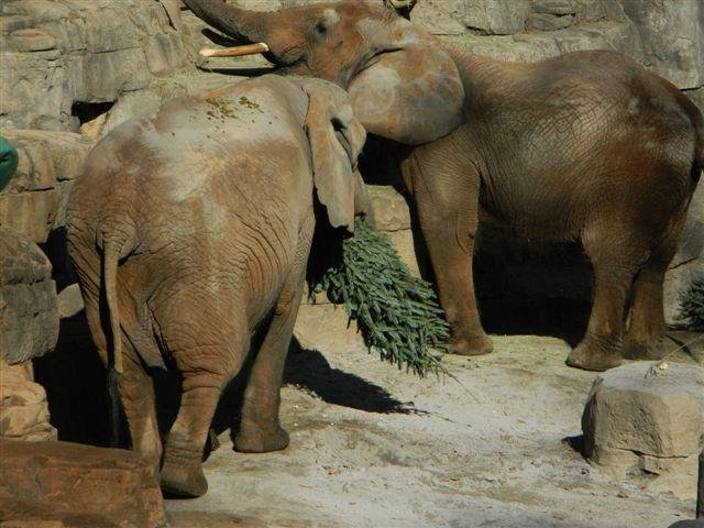 Elephants Joy and Ladybird at Greenville Zoo (Greenville Zoo / Facebook)