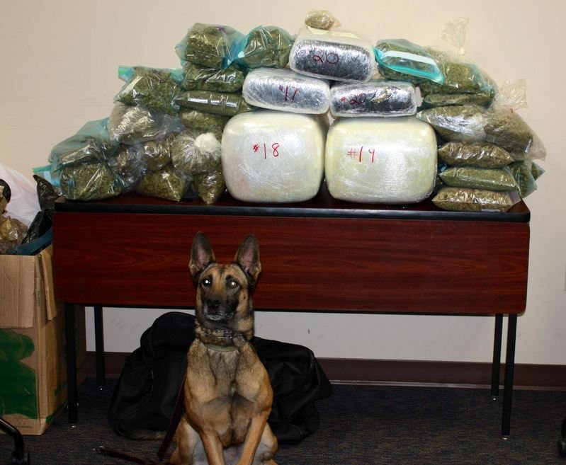 The marijuana police seized. (Courtesy: Mauldin Police Department)