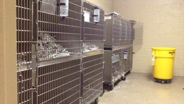 The canine adoption kennels at PAWS. (March 17, 2014/FOX Carolina)