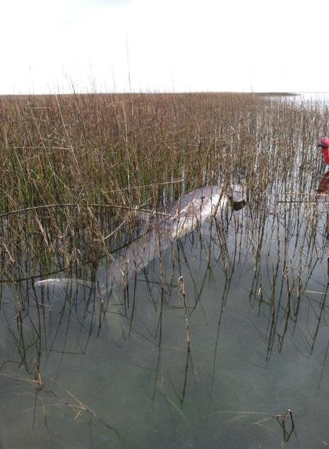 Beaufort resident Susan Trogdon found this dead bottlenose dolphin in the Harbour River in Beaufort on Saturday morning.