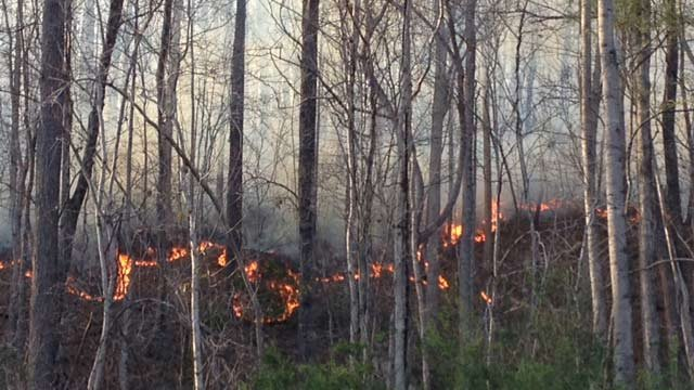 The fire could be seen in the woods near Jarrard Drive in Marietta. (April 2, 2014/FOX Carolina)