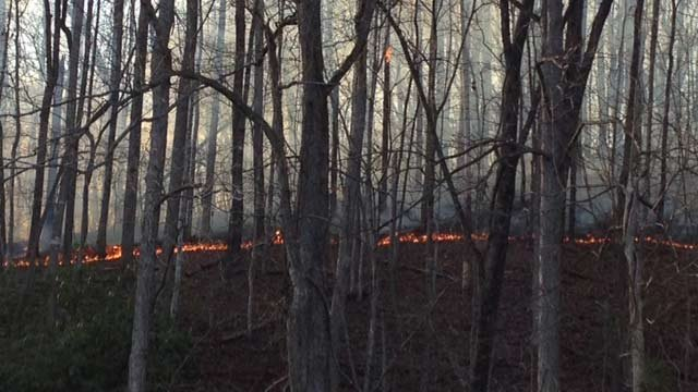 The fire line as seen from Jarrard Drive. (April 2, 2014/FOX Carolina)