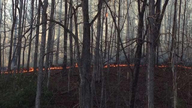 The fire line as seen from Jarrard Drive. (April 2, 2014/FOX Carolina)