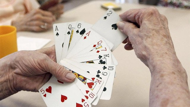 Player arranges cards during bridge game. (File/Associated Press)