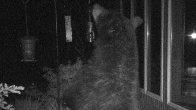 Paris mtn other areas see return of bears with warmer weather fox paris mtn other areas see return of bears with warmer weather fox carolina 21 publicscrutiny Choice Image