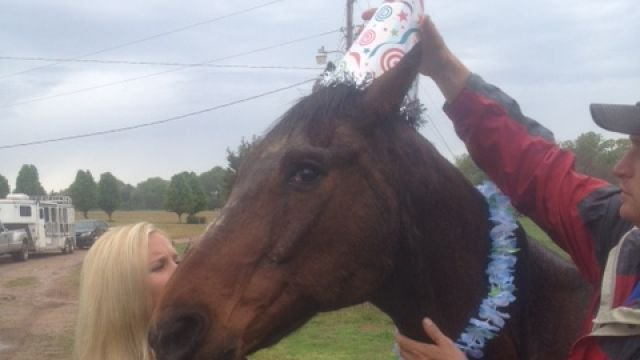 Shot, 40, may be oldest American Quarter Horse on record soon (FOX Carolina)