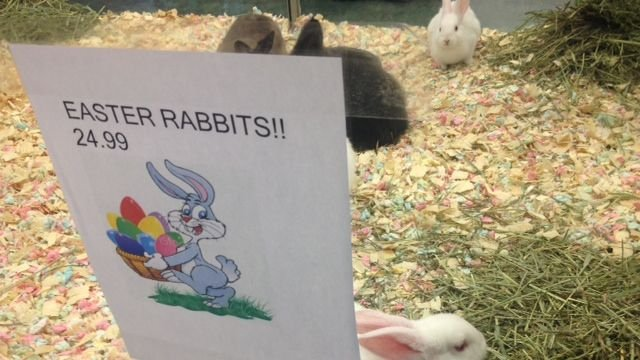 Parents race to buy rabbits for Easter. (April 18, 2014)