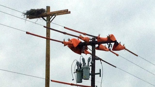 The new nesting pole (L) and the repaired power pole (R). (April 30, 2014/FOX Carolina)