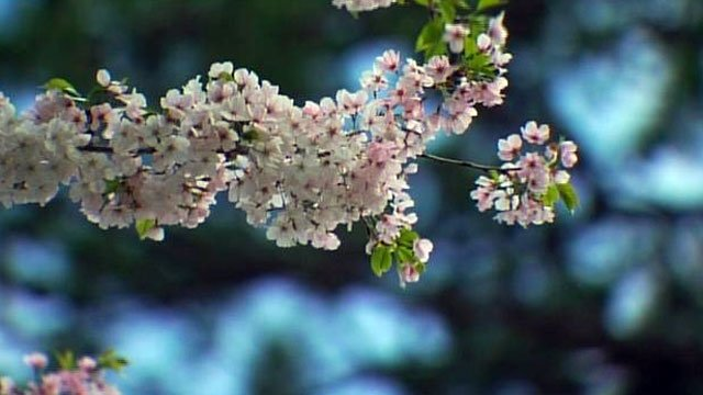 Springtime is perfect for festivals and outdoor events. (File/FOX Carolina)