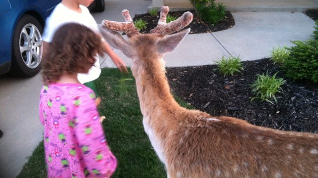 The deer was not afraid of children or neighbors. (May 4, 2014/FOX Carolina)