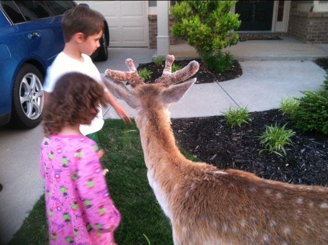 Comet and neighborhood kids on Sunday during his wanderings off the farm. (May 4, 2014/FOX Carolina)