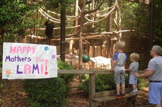 Greenville Zoo celebrates mothers day (FOX Carolina)