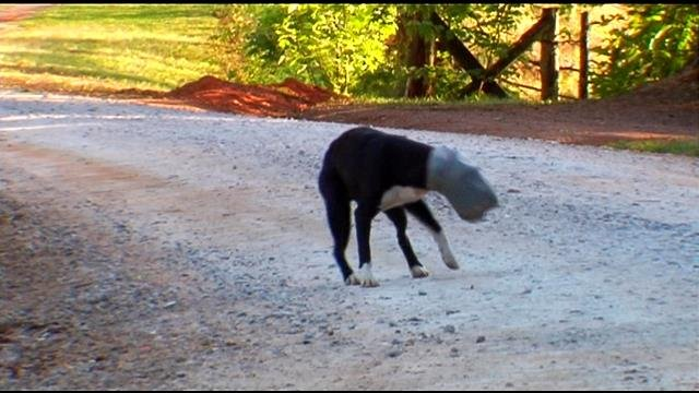 The dog won't let people get very close to help him. (May 15, 2014/FOX Carolina)