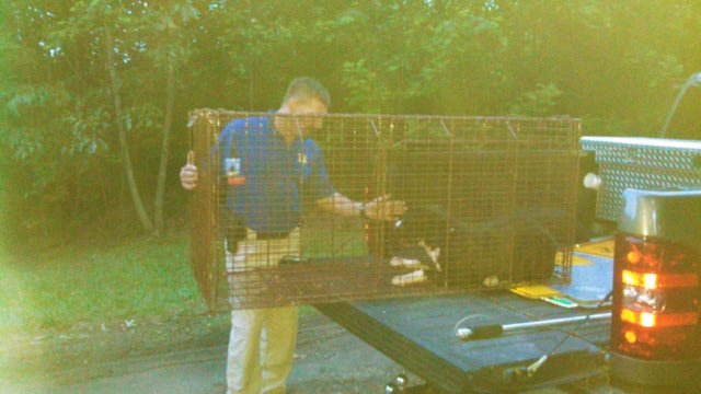 Piper was captured by animal control on Monday night.